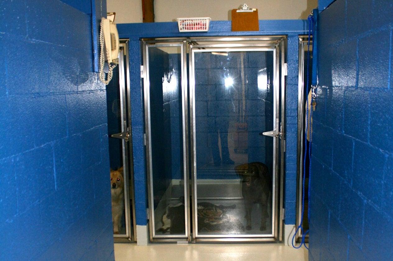 kennel-after-entrance.HyWh5HVS8.jpg